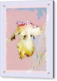 Painted Iris Acrylic Print by Karen Lynch