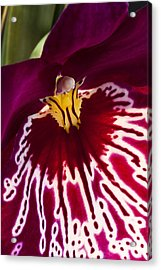 Acrylic Print featuring the photograph Painted Orchid Ll by Shirley Mitchell