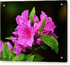 Acrylic Print featuring the photograph Painted Pink by Mary Zeman
