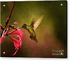 Acrylic Print featuring the photograph Painterly Hummingbird #1 by Anne Rodkin