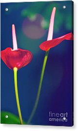 Painter's Palette (anthurium Andraeanum) Acrylic Print by Maria Mosolova