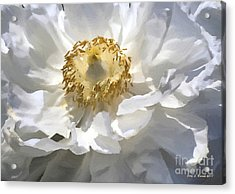 Painting Of A White Flower Acrylic Print by Jerry L Barrett