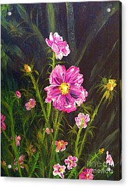 Painting Pink Streaked Cosmos Acrylic Print by Judy Via-Wolff