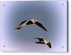 Pair Of Gulls Acrylic Print by Karol Livote