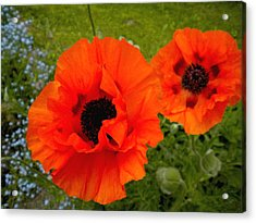 Acrylic Print featuring the painting Pair Of Poppies by Renate Nadi Wesley