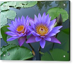 Pair Of Purple Lotuses Acrylic Print by Gregory Smith