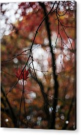 Pair Revisited Acrylic Print