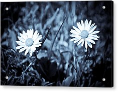 Paired Acrylic Print by Ruth MacLeod