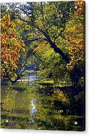 Pairie Oaks Acrylic Print by Mindy Newman