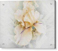 Pale Beauty Acrylic Print by Lynn Wohlers