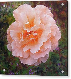 Acrylic Print featuring the painting Pale Orange Begonia by Richard James Digance