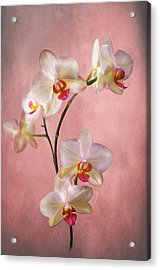Pale Pink Orchid Spray Acrylic Print