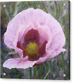 Acrylic Print featuring the painting Pale Pink  Poppy by Richard James Digance