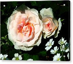 Pale Pink Roses In Garden Acrylic Print