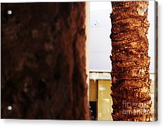 Palm And Wall Acrylic Print
