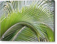Palm Frawns Acrylic Print by Melanie Beasley