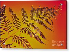 Palm Frond In The Summer Heat Acrylic Print by Kaye Menner