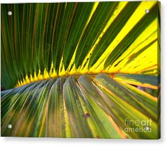 Palm Fronds Illuminated By The Sun Acrylic Print by Yali Shi