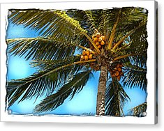 Palm Fronds Acrylic Print by Linda Olsen
