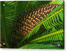 Palm Heart Acrylic Print