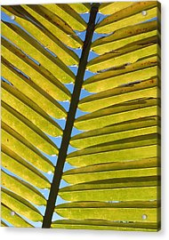 Palm Leaf Acrylic Print by Chris Andruskiewicz