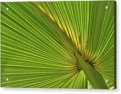 Acrylic Print featuring the photograph Palm Leaf II by JD Grimes