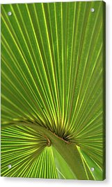 Acrylic Print featuring the photograph Palm Leaf by JD Grimes