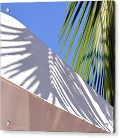 Palm Leaf Acrylic Print by SteffenTuck