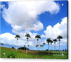 Palm Parade Acrylic Print by Barbara Marcus