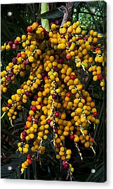 Palm Seeds Baroque Acrylic Print by Steven Sparks