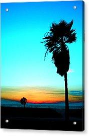 Palm Set Acrylic Print by Darren Cole Butcher