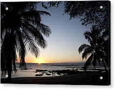 Palm Sunset Acrylic Print by Peter French