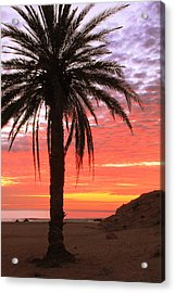Palm Tree And Dawn Sky Acrylic Print by Roupen  Baker