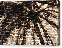 Palm Tree Cup Acrylic Print