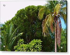 palm tree Key west Acrylic Print by Josee Dube