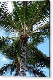 Palm Tree Umbrella Acrylic Print by Athena Mckinzie