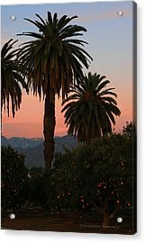 Palm Trees And Orange Trees Acrylic Print