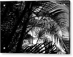 Palm Trees Acrylic Print by Colleen Cannon