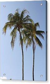 Palm Trees In Love Acrylic Print by Natalija Wortman