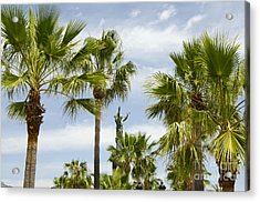 Palm Trees In Spain Acrylic Print by Perry Van Munster