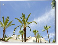 Palm Trees In The Blue Acrylic Print by Perry Van Munster