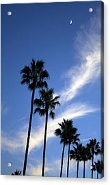Palm Trees In The Sky Acrylic Print by Terry Thomas