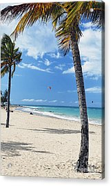 Palm Trees On Ocean Park Beach Acrylic Print by George Oze