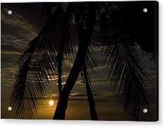 Palm Trees Silhouetted By The Setting Acrylic Print by Todd Gipstein