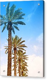 Palm Trees Acrylic Print