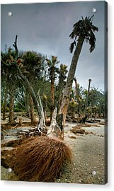 Palm Trees Walking Acrylic Print by Steven Ainsworth