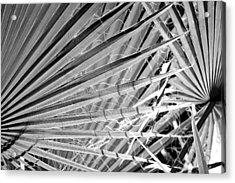 Palm Veils Acrylic Print
