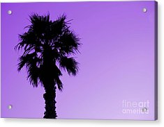 Palm With Violet Sky Acrylic Print