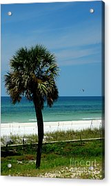 Palmetto And The Beach Acrylic Print by Susanne Van Hulst