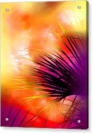 Acrylic Print featuring the photograph Palmetto by Judi Bagwell